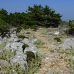 The singletrack from Vidova gora to Bol