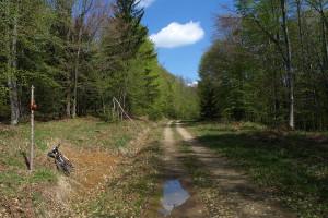 The trail to Velika Poljana