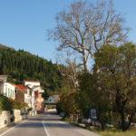 Trsteno village