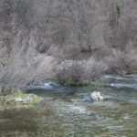 The spring of the river Vitunjčica near Vitunj village