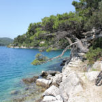 The singletrack along the coast of The Great Lake on The Island of Mljet