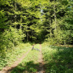 The section along the rainforest from Javornik to Čorkova Uvala valley