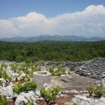 The vineyard and water tank in Boraja zone