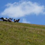 Horses at the ridge of Stara Planina mountain