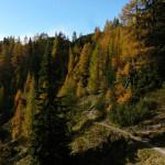 The downhill singletrack