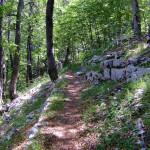 The singletrack section from Dokozina Plana to Šatorina peak.