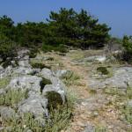 The singletrack from Vidova gora to Bol