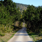 The paved road section