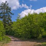 The trail on Strahinjščica mountain.