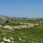 Pasture at Čvrsnica mountain.
