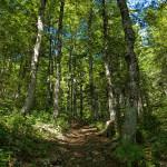 The hiking trail at Velika Osječenica mountain.