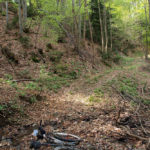 The singletrack section to Gornja Bistra