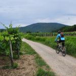 Žlahtina vineyards