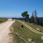 The carriageway section on Vlašić mountain