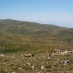 The pasture region on Vlašić mountain