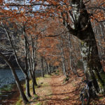 The path around Donje Bare lake