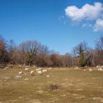 The pasture area near Niska village