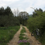 The carriageway section from Ston to Ponikve