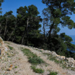 The carriageway section along the south coast of The Island of Mljet