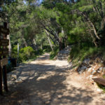 The junction at the coast of The Small Lake on The Island of Mljet
