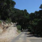 The junction at the coast of The Great Lake on The Island of Mljet