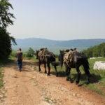 The carriageway at velika Golija mountain