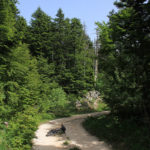 The section along the forest of Velika Golija mountain