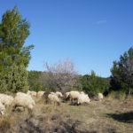 The pasture zone at Kistanje Plateau