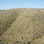 The abandoned lavender fields on The Island of Hvar