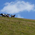 Horses at the ridge of Stara Planina mountain