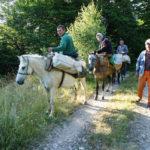 Shepherds's caravan on Korab mountain