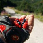 The fruit in National Park Rila